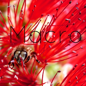 Macro-Category-new